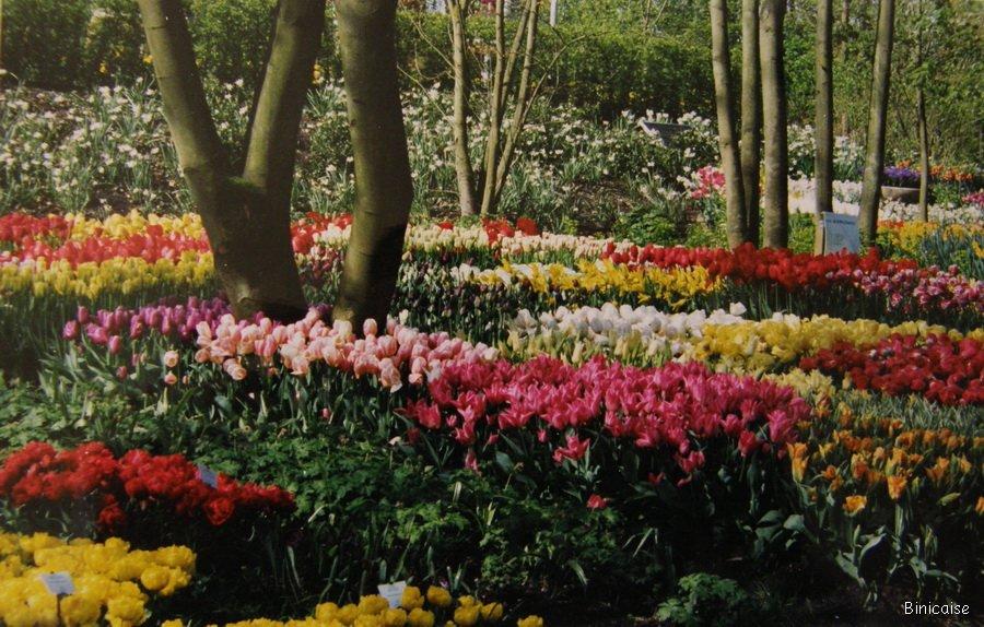 Parc Floral en Hollande. dans Fleurs et plantes Hollande-parc-floral-01