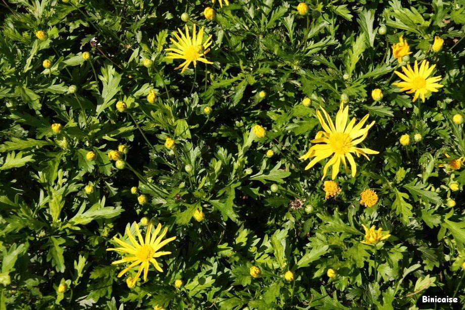 Fleurs dans Fleurs et plantes IMG_3943_redimensionner