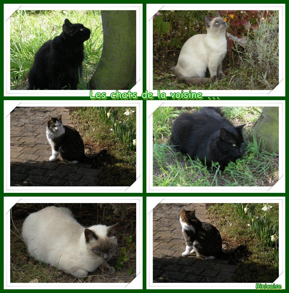 Les chats du voisinage. dans Creations Les-chats-de