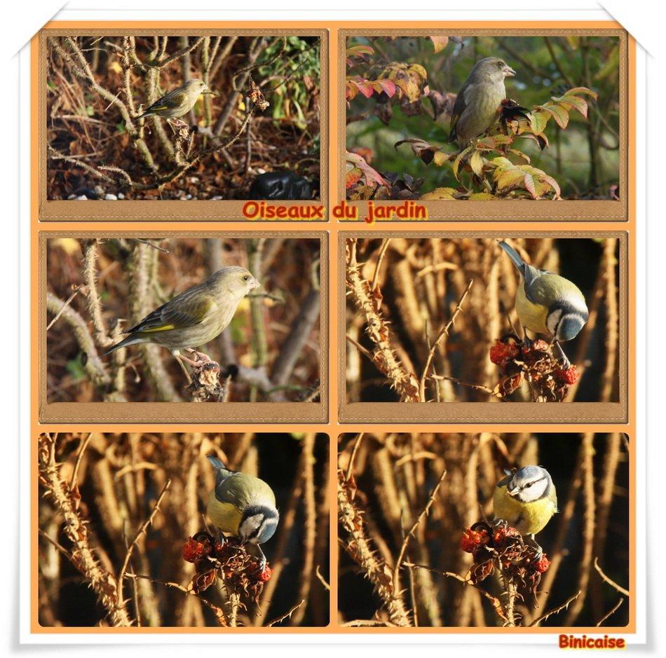 Oiseaux du jardin . dans Creations Oiseaux-du-jardin_redimensionner