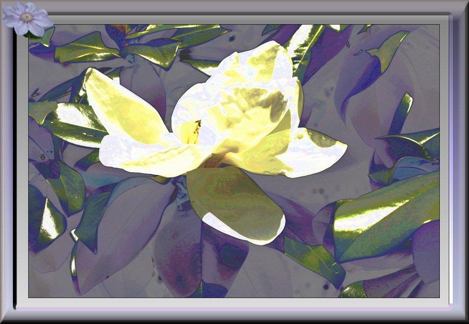 Magnolia. dans Creations Variations-sur-Magnolia