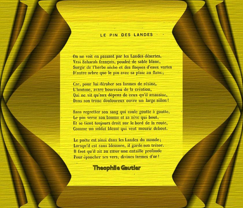Le Pin des Landes. Théophile Gautier. dans Fleurs et plantes le-pin-des-landes