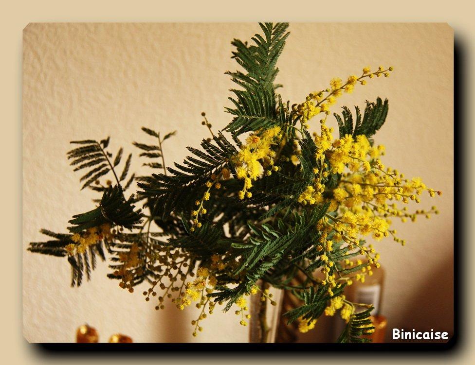 Une branche de mimosas  dans Fleurs et plantes Mimosas