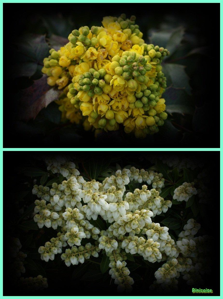 Arbustes en fleurs dans Fleurs et plantes Arbustes-en-fleurs-01-vert