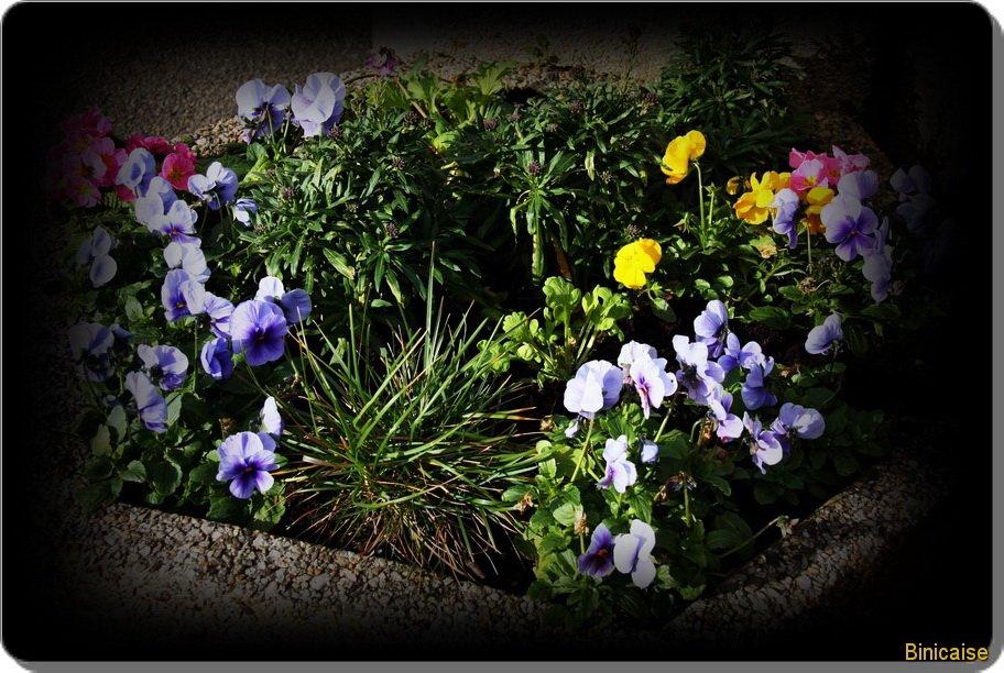 Ville fleurie. Printemps. dans Fleurs et plantes Fleurs-en-ville_b