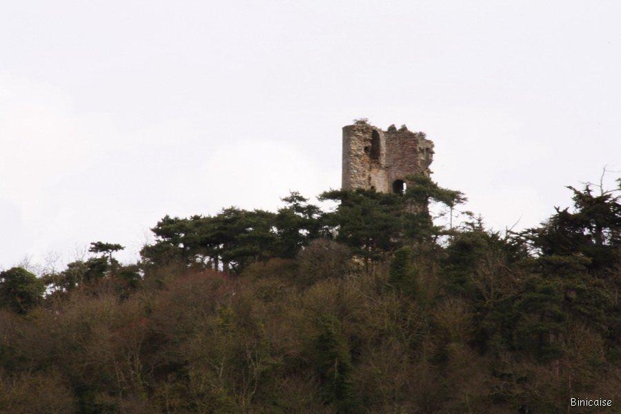 Binicaise la vieille tour for Amaryllis fleurs cesson