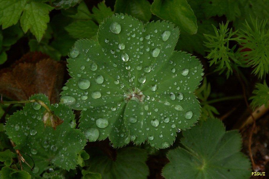 Goutelettes. dans Jardin binicaise PICT6378_redimensionner