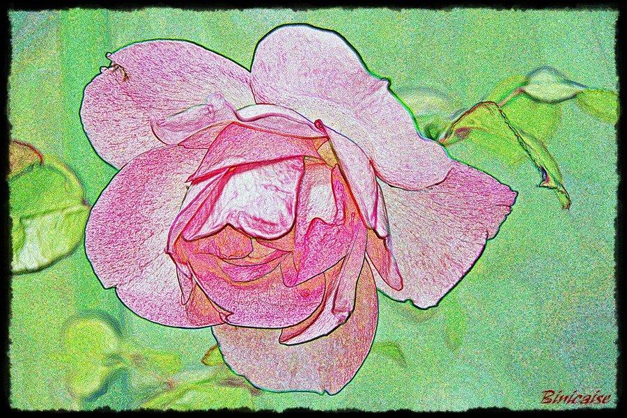 Mon amie la rose . dans Creations Rose-crayon