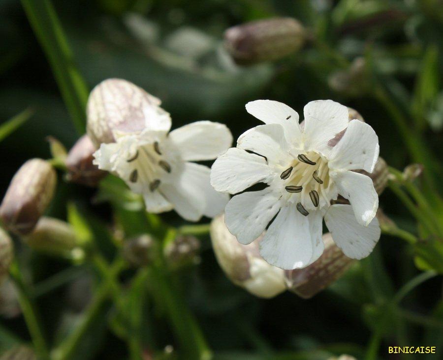 IMG_5141b900 Fleurs des champs dans Photos