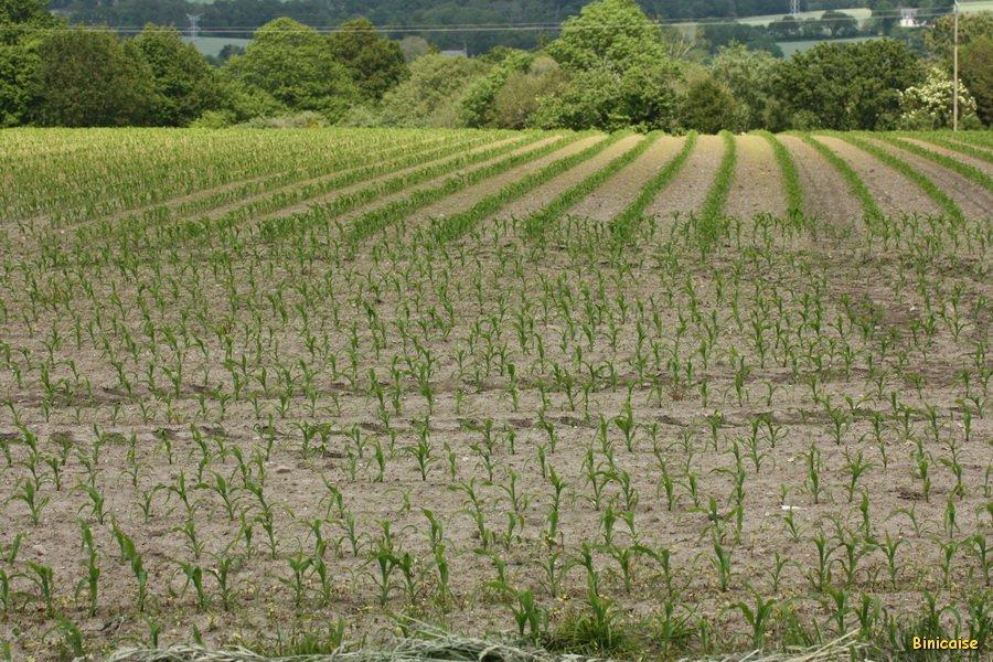 Travaux des champs. dans Bretagne IMG_5385_redimensionner