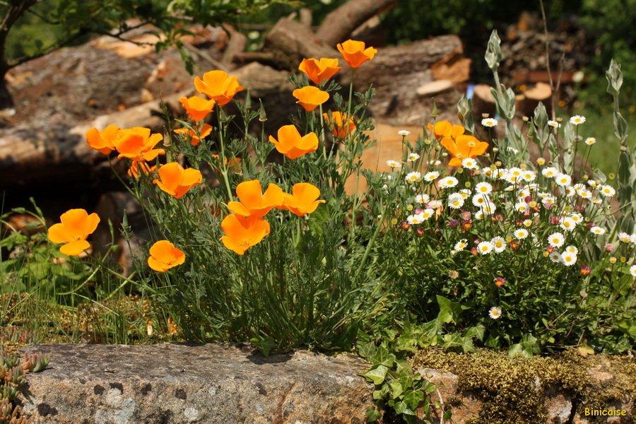 IMG_5397_redimensionner Murs fleuris dans Photos