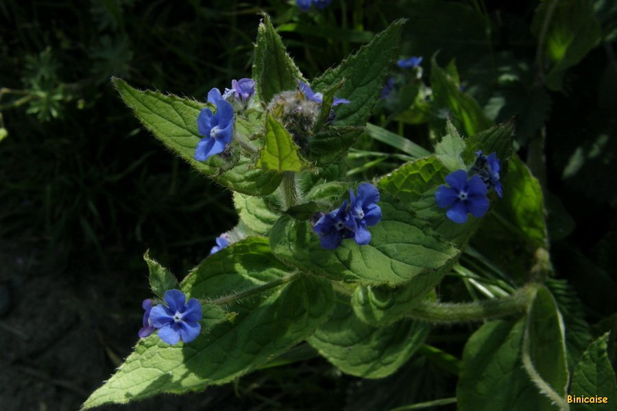 P5126848_redimensionner Bleu dans Photos