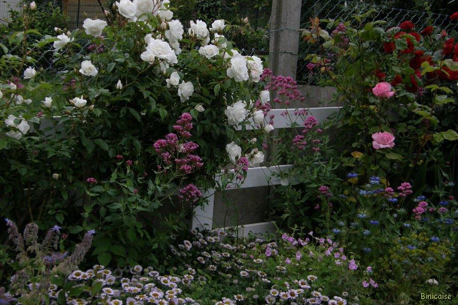 Binicaise mixed border for Jardin anglais mixed border
