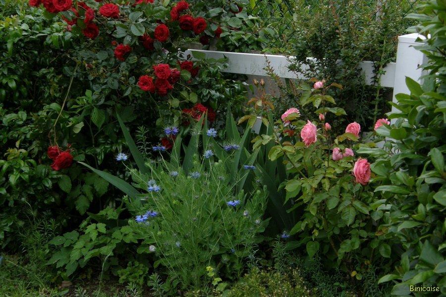 P6146927_redimensionner Jardin binicaise dans Photos