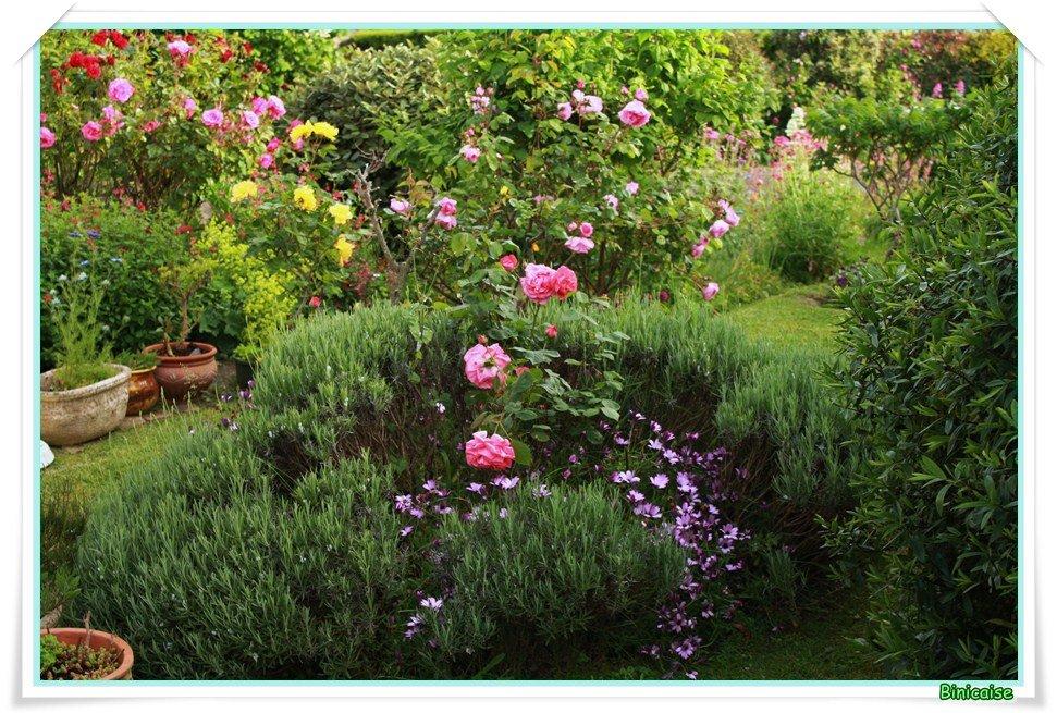 binicaise le jardin en juin