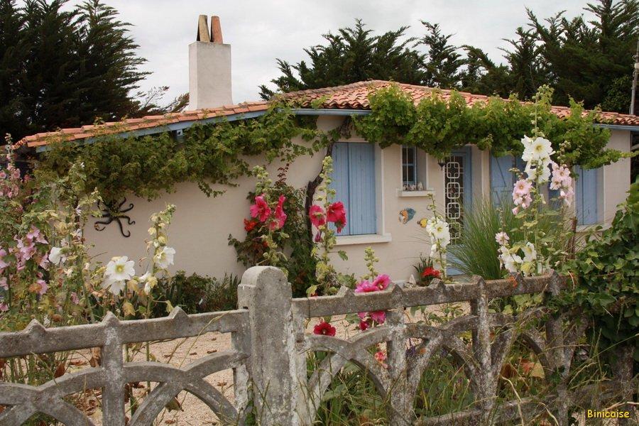 Les fleurs à l'Ile d'Aix. dans La Rochelle IMG_5825_redimensionner