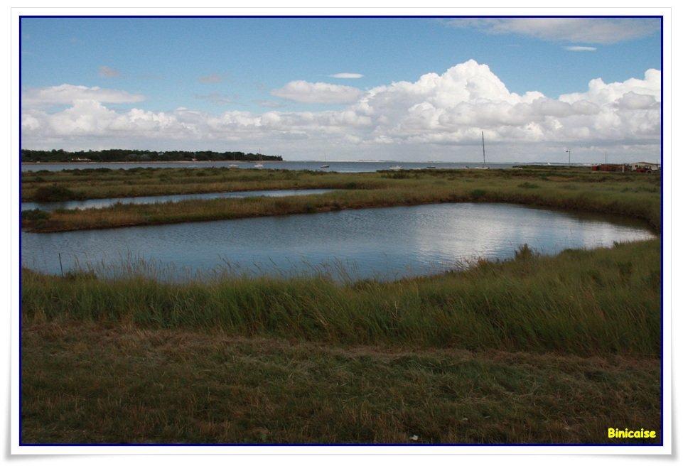 Bassins ostréicoles  à l'Ile d'Aix. dans La Rochelle Marais-salants