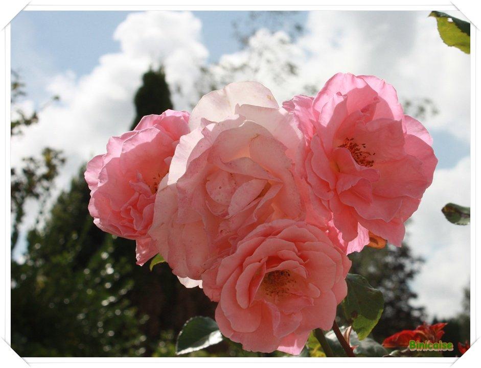 Bouquet de roses dans Fleurs et plantes Bouquet-de-roses
