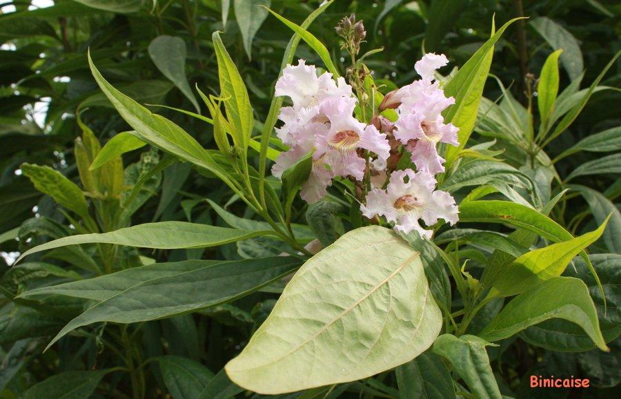 Belle inconnue. dans Fleurs et plantes Fleur-dautomne