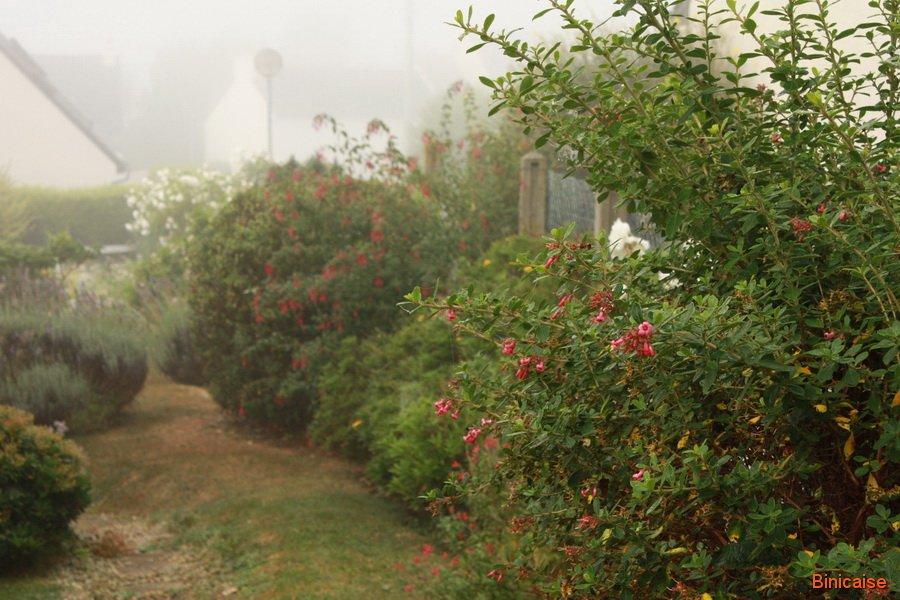 Matin brumeux. dans Jardin binicaise Matin-brumeux-02