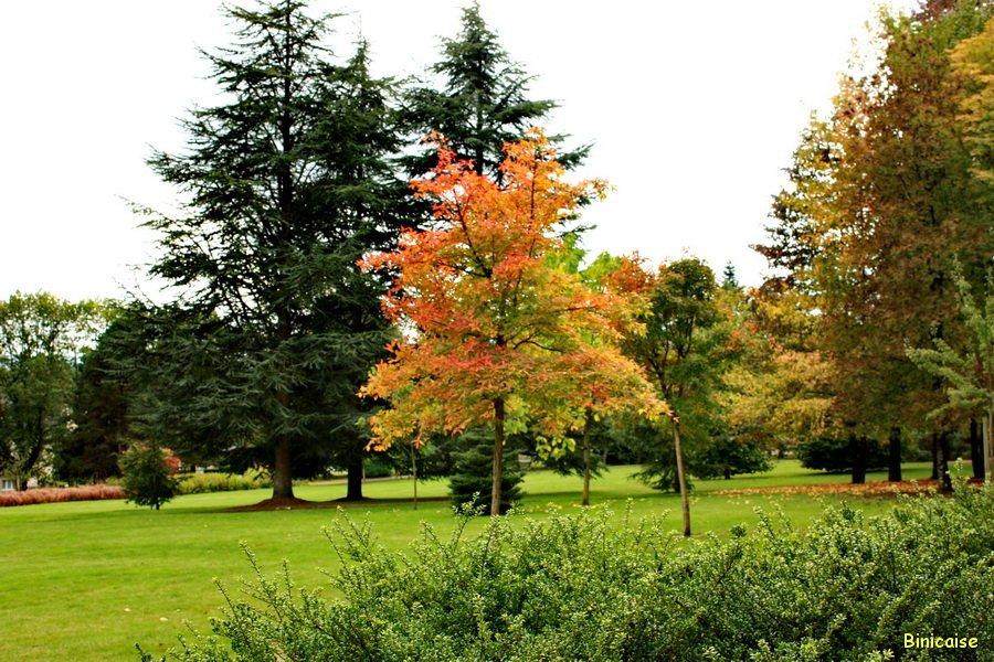 arboretum-de-tesse-06 Arboretum dans Photos