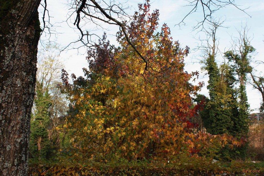Les couleurs de l'automne. dans Bretagne couleurs-de-lautomne-01