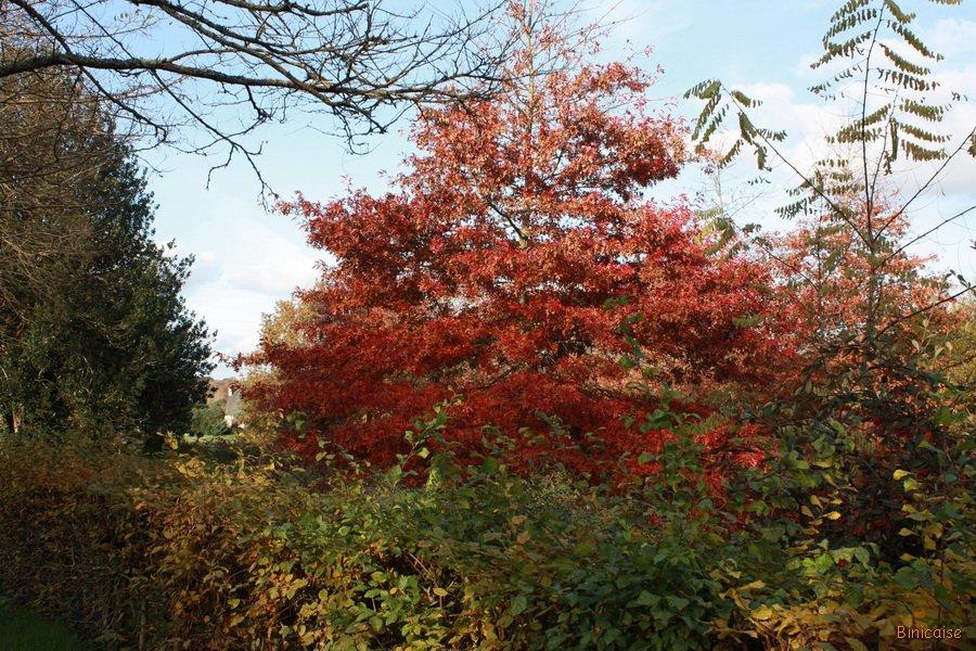couleurs-de-lautomne-02 Couleurs d'automne dans Photos