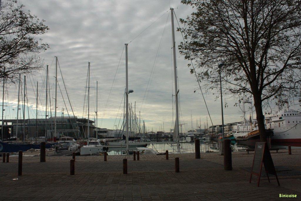 Forêts de mâts. dans La Rochelle le-port-01