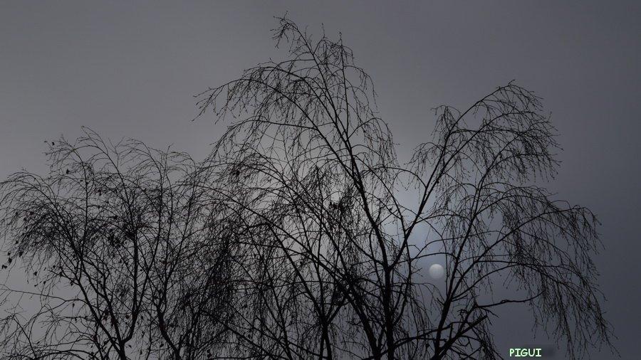 900-1000957 Soleil gris dans Photos