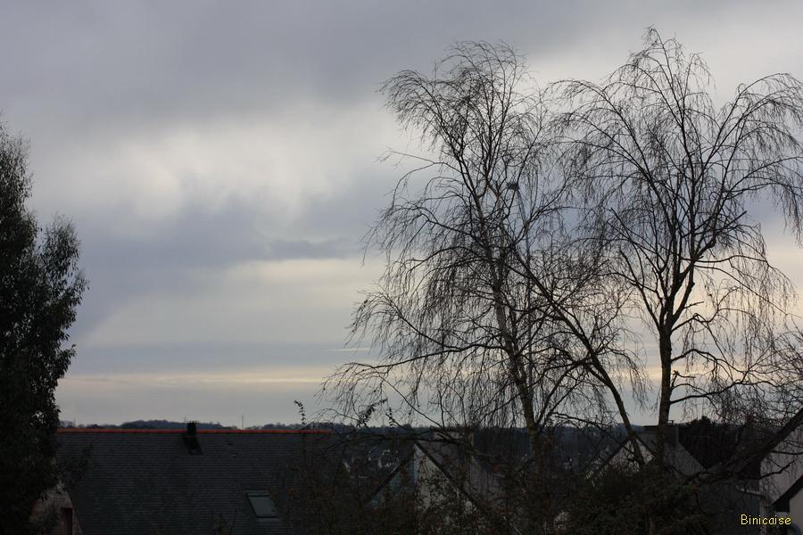Les arbres dépouillés en hiver . dans Jardin binicaise img_7820_redimensionner