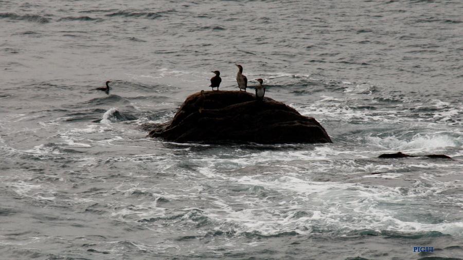 Les naufragés . dans Bretagne les-naufrages