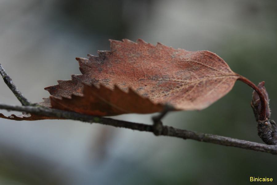Une feuille d'automne. dans Jardin binicaise une-feuille-01