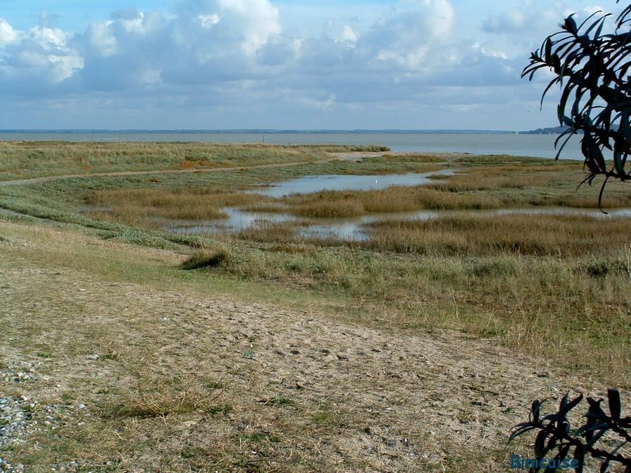 Souvenirs de la Baie de Somme . dans Photos baie-de-somme-2005