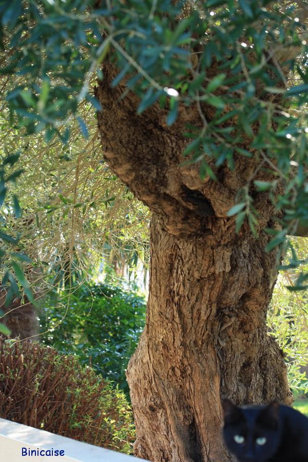 Tronc noueux. dans Fleurs et plantes eucalypus-tronc