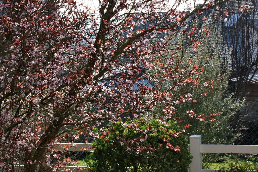 Février au jardin . dans Jardin binicaise fevrier-au-jardin-01