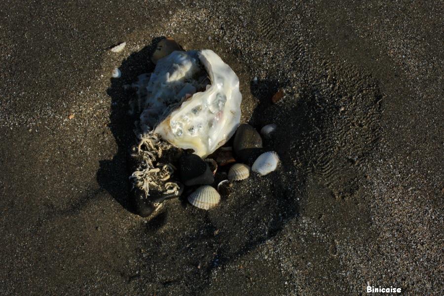 Fortunes de mer. dans Bretagne la-banche-2013-11