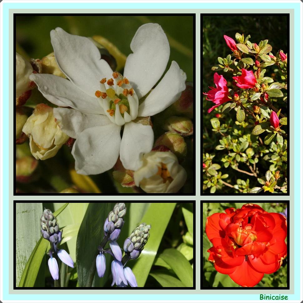 Patchwork fleuri. dans Jardin binicaise fleurs-printemps