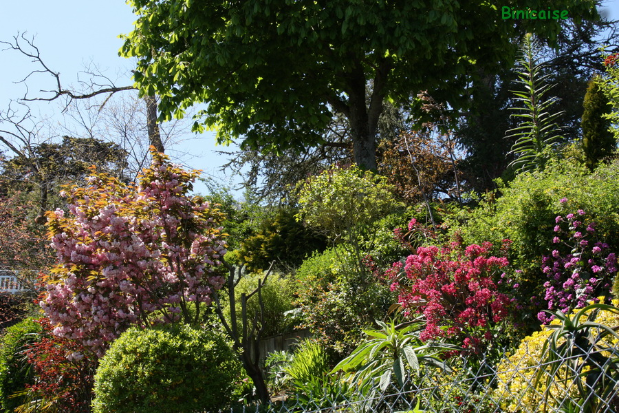 Jardin en gradins sur la falaise. dans Jardins et maisons jardin-du-bord-de-mer