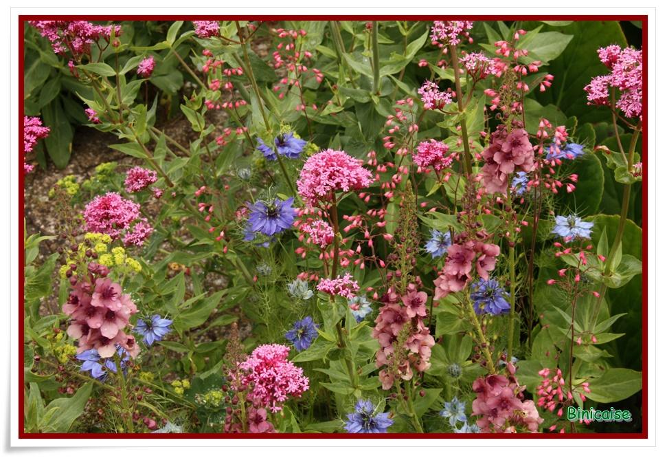 Palette de couleurs. dans Jardin binicaise img_9582