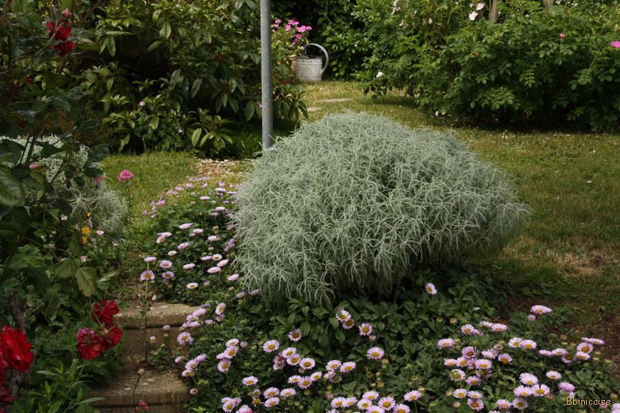 Scènes de jardin. dans Jardin binicaise img_9688_redimensionner