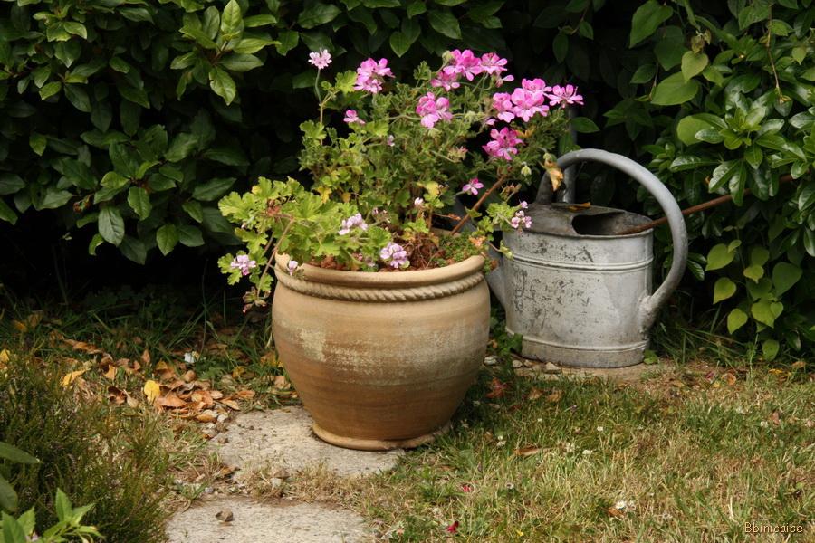img_9689_redimensionner Jardin dans Photos