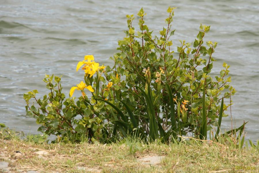 Les lacs de Millas 4 dans Photos millas-2013-06