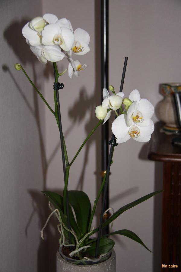 Mon orchidée. dans Fleurs et plantes mon-orchidee-01