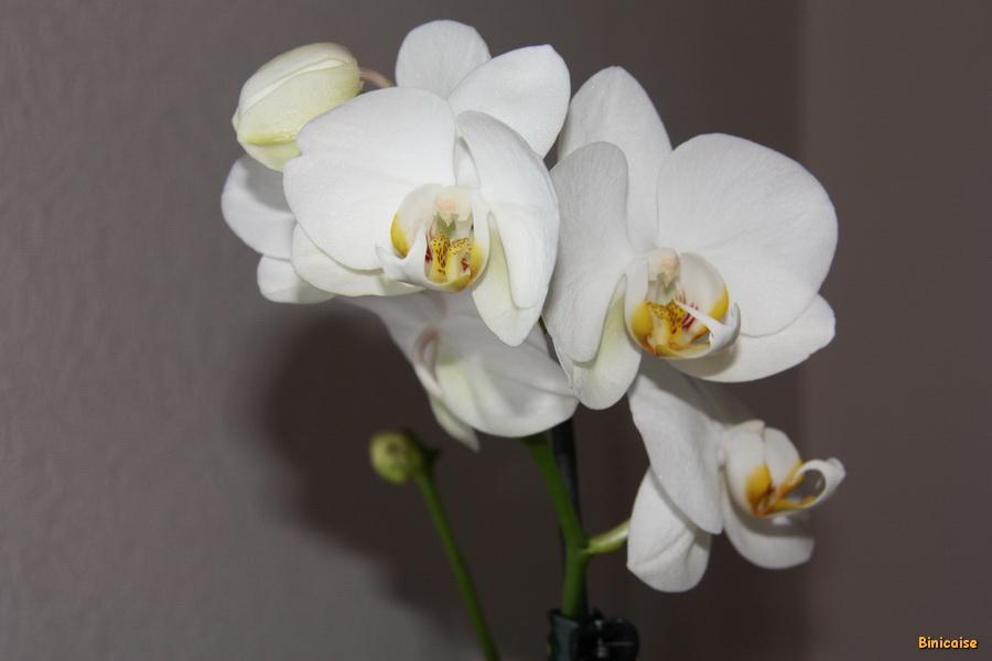mon-orchidee-02 Orchidée dans Photos