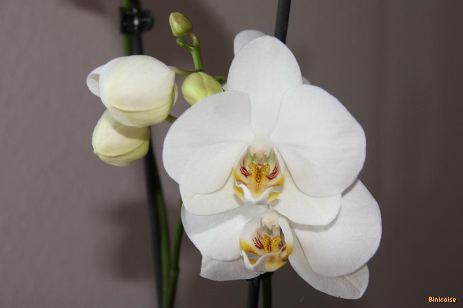 mon-orchidee-03