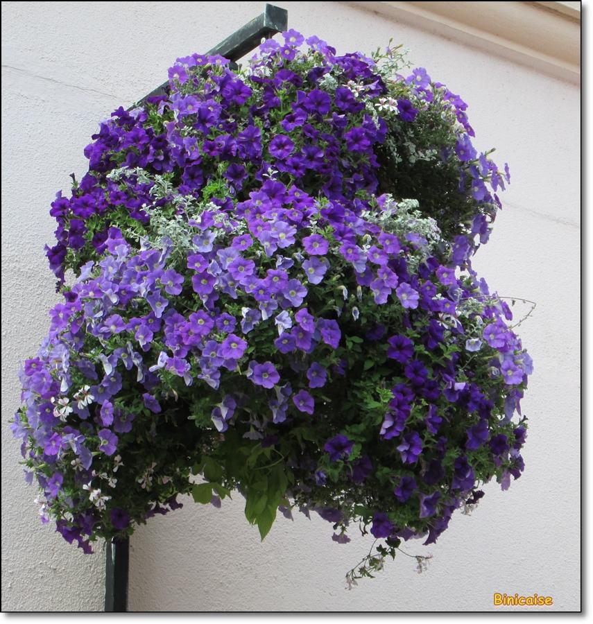 Suspension fleurie. dans Fleurs et plantes jardinieres-suspendues-01