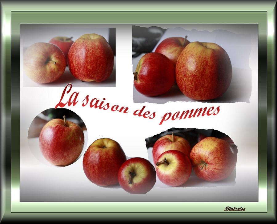 Retour à Binic . dans Fleurs et plantes la-saison-des-pommes
