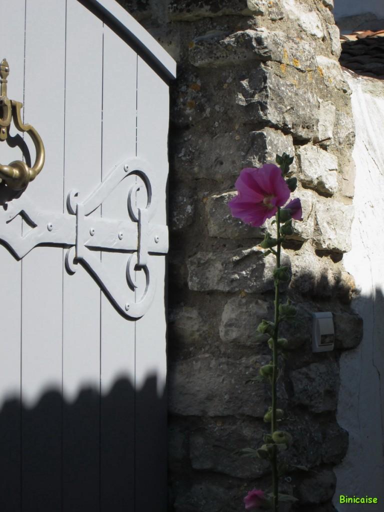 Petite ruelle , Ile de Ré. dans Charentes Maritimes ruelle-ile-de-re-02
