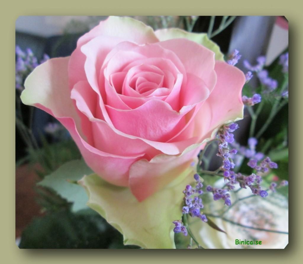 Rose de mon bouquet. dans Fleurs et plantes rose-bouquet