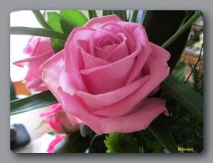 Rose dans bouquet